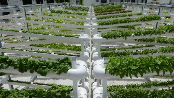 Farming in Singapore goes digital with IoT-as-a-Service platform